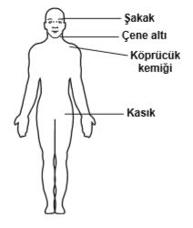 Omuz ve koldaki kanamalarda, şekilde gösterilen hangi bölgeye basınç uygulanmalıdır?